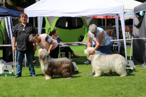 BOB BOS Bester Junghund Bearded Collie